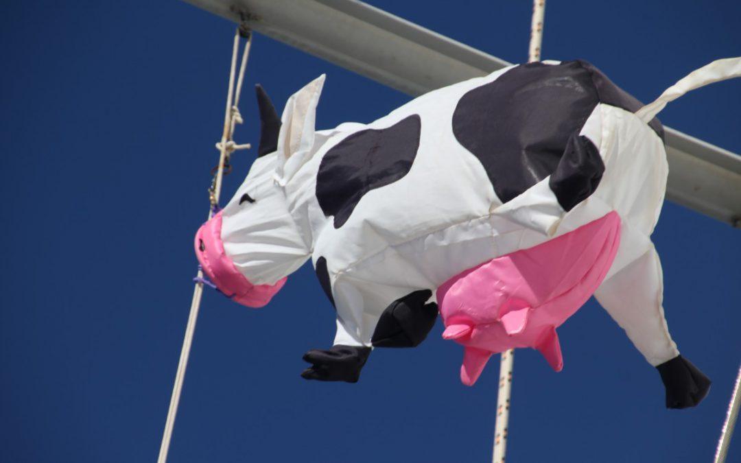 Die Kuh – das Hochseeinterview